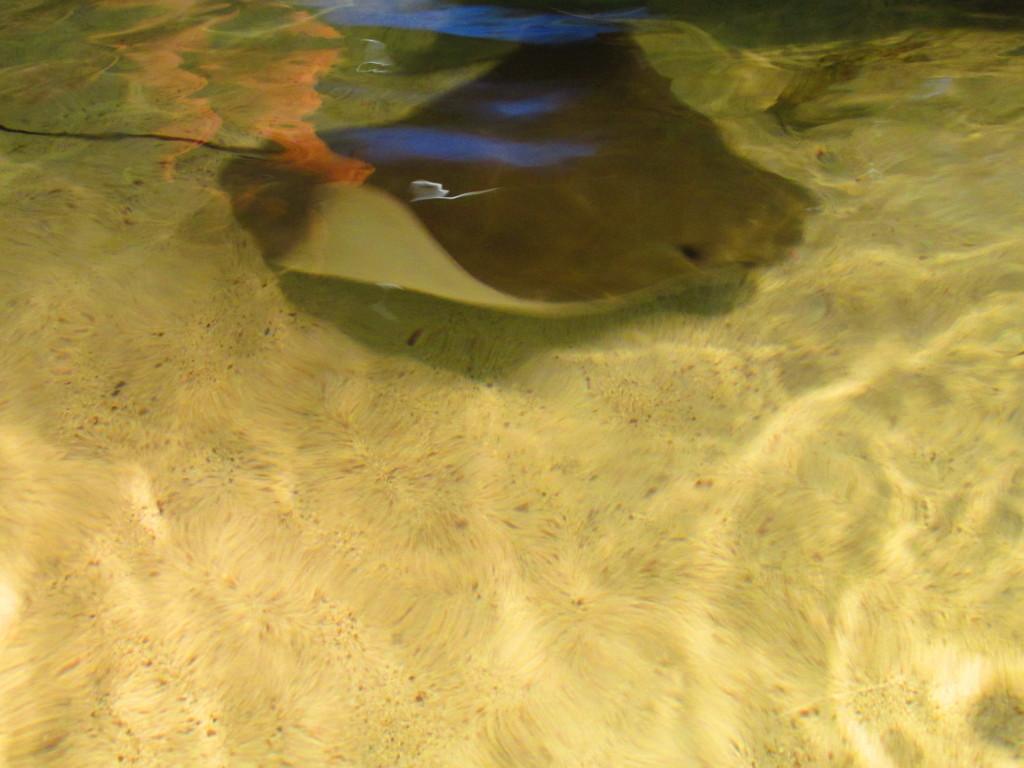 Aquarium 2013 009